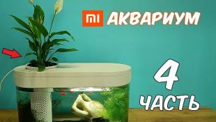 Аквариум XIAOMI. Часть 4. Посадил Цветок. Реакция Муравьев на корм для рыбок.
