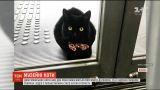 Двоє японських котів два роки намагаються потрапити до музею, але їх зупиняє охоронець