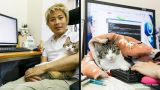Японская компания стала брать кошек из приюта, чтобы снизить стресс у сотрудников