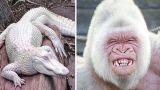 9 Самых Красивых Животных-Альбиносов